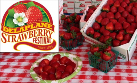 Delaplane Strawberry Festival
